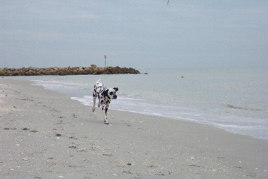 Baden auf der Insel Sanibel